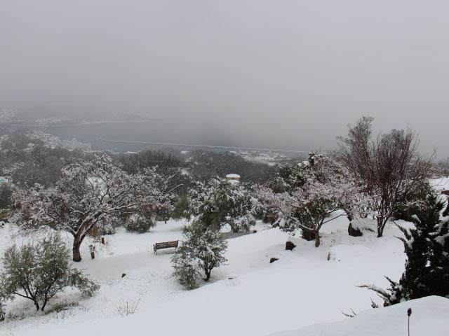 牛窓オリーブ園の冬をイベント・名物・絶景から楽しもう