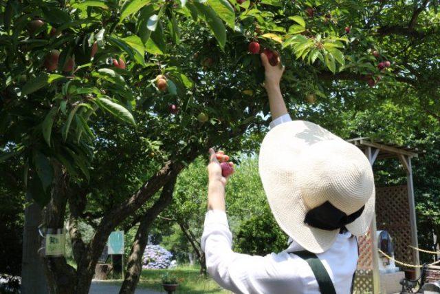 【農園だより】初夏の実りの収穫!!