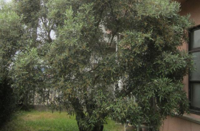 第4回牛窓アカデメイア 哲学カフェin プラトンゆかりの樹がある牛窓オリーブ園