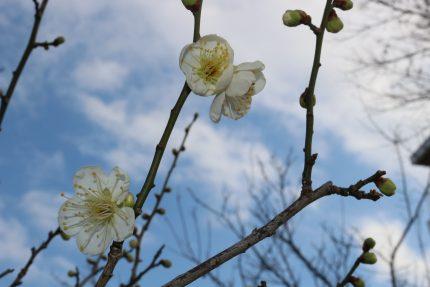 【農園だより】春の足音かすかに♪