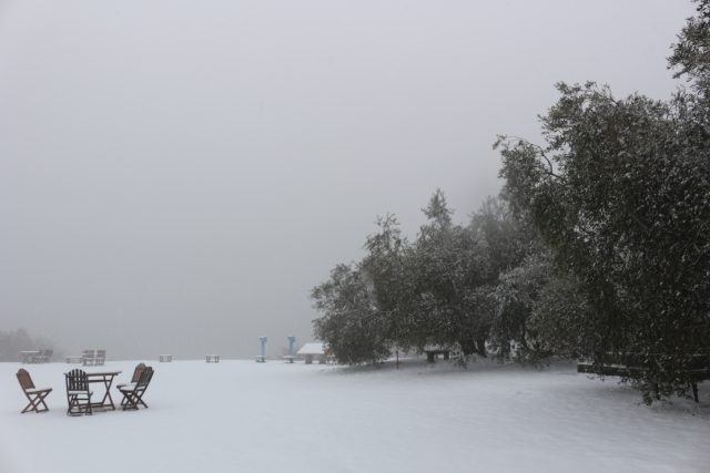 【農園だより】オリーブ園雪景色!
