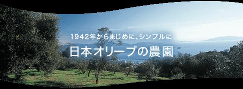 日本オリーブの農園